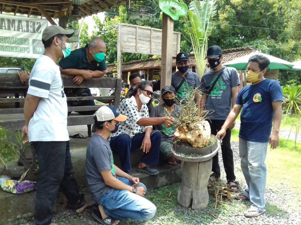 Ada Sekolah Seni Membuat Tanaman Bonsai di Gresik - Jawa ...